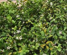 Demre'de ağaçlar çiçekler açtı