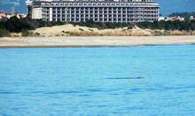 Akdeniz foku ilk kez nehirde görüntülendi