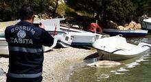 Bodrum'da denizde ölü Akdeniz foku bulundu