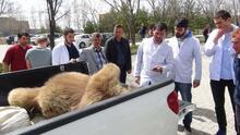 Yiyecek arayan 230 kiloluk boz ayı canından oldu