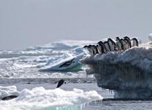Antartika'da 1,5 milyonluk yeni penguen sürüsü keşfedildi