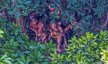 Fırtına rotayı değiştirdi, Amazon kabilesini fotoğrafladı!