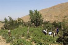 Bitlis'te Osmanlı Dönemi'ne ait yeni mezar taşları bulundu
