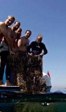 Marmara Denizi'ndeki mercanlar kurtarıldı