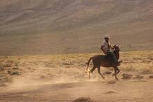 Yılkı atları ücretsiz dağıtılıyor