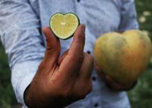 Şekle bürünen meyveler ihracatta servet oldu