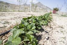 Bozkırın ortasına kurduğu 'organik' çiftlikle hayalini gerçekleştirdi