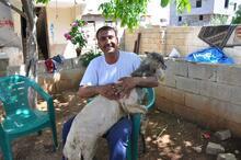 Koyunun kulağında ikinci bir ağız olduğu ortaya çıktı