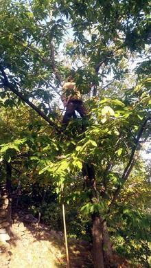 Bu haber ağaca tırmanabilen ve denge sorunu yaşamayan erkekler için