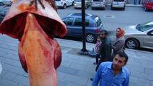 Aras Nehri'nden 42 kiloluk yayın balığı çıktı