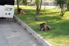 10 yaşındaki çocuk 5 köpeğin saldırısına uğradı