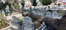 Ordu'da fırtınada devrilen ağaçlar mezarlara zarar verdi
