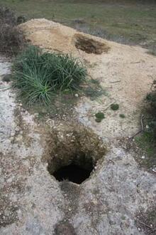 Kral ve ailesinin mezarında bulundu! Görünce apar topar kaçtılar