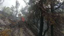 Ormanlık alandaki yangından görüntüler