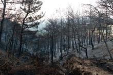 Son dakika... Orman yangını sonrası İskenderun'da gergin gece