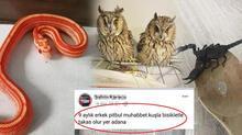 İnternetten hayvan satanlara tepki! Yılan, baykuş, akrep bile satıyorlar