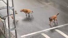İstanbul'da vatandaşlara korku salan başıboş köpekler