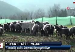 İstanbulda yöneticiliği bıraktı, Sakaryada koyun yetiştiriyor