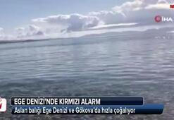 Ege Denizinde kırmızı alarm