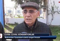 Bodrumdan Yunanistana deniz süngeri ihracatı