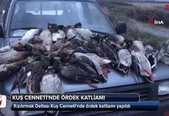 Kuş Cennetinde ördek katliamı