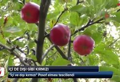 İçi ve dışı kırmızı elma tescillendi