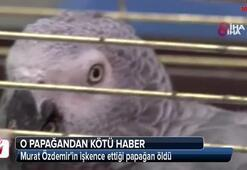 Murat Özdemirin işkence ettiği papağan öldü