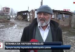 İstanbulda hayvan hırsızlığı