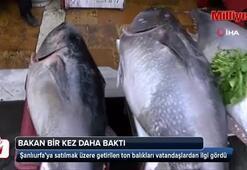 Şanlıurfada ton balığına yoğun ilgi