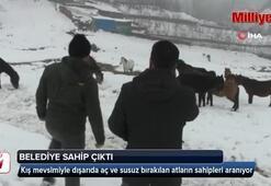 Aç kalan at sürüsüne belediye sahip çıktı