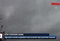 Manisada sığırcık kuşlarının görsel şöleni