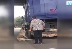 Kamyonun kasasında bağlı olan köpek asılı kaldı