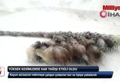 Doğu Anadolunun yüksek kesimleri beyaza büründü