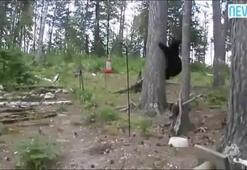 Kedi ve yavru ayı karşı karşıya gelince...