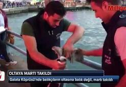 Galata Köprüsünde balıkçıların oltasına balık değil, martı takıldı