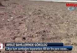 Likya kum zambağını koparanlara 48 bin lira para cezası