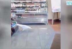 Hırsız martı kameraya böyle yakalandı