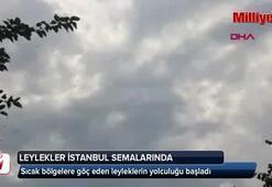 Leylekler İstanbul semalarında