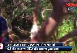 Kuşadası'nda 10,5 kilo esrar ve 4572 kök kenevir yakalandı