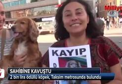2 bin lira ödüllü köpek, Taksim metrosunda bulundu
