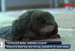 Sokakta buldukları Ebabil Kuşunun yaşaması için yardım bekliyorlar