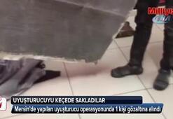 Keçeye emdirilen uyuşturucu polisi bile şaşırttı
