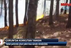 Tabiat parkındaki yangın korkuttu