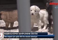 Konya'da başıboş köpekler ücret ödenerek sahiplendiriliyor