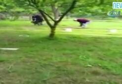 Yaşlı çift kendi bahçelerinde 'Survivor' mücadelesi yaptı