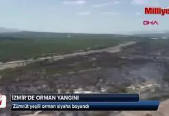 İzmirde zümrüt yeşili orman siyaha boyandı