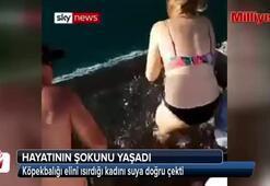 Köpekbalığı elini ısırdığı kadını suya doğru çekti