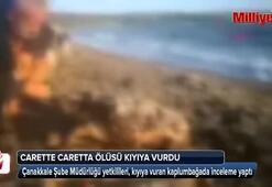 Lapsekide sahile, ölü caretta caretta vurdu