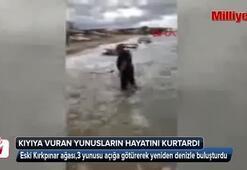 Kıyıya vuran yunusları böyle kurtardı