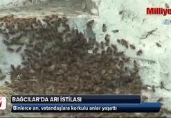 Bağcılarda arı istilası